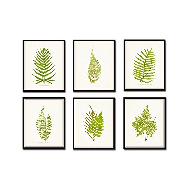 Vintage Ferns Botanical Print Set No. 2 - 6 Vintage Fern Giclee Canvas Prints