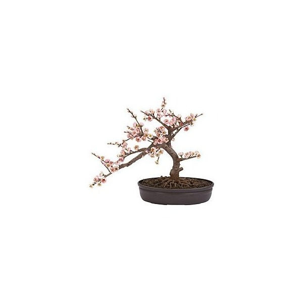 Jonsteen Growing Kit - Cherry Blossom