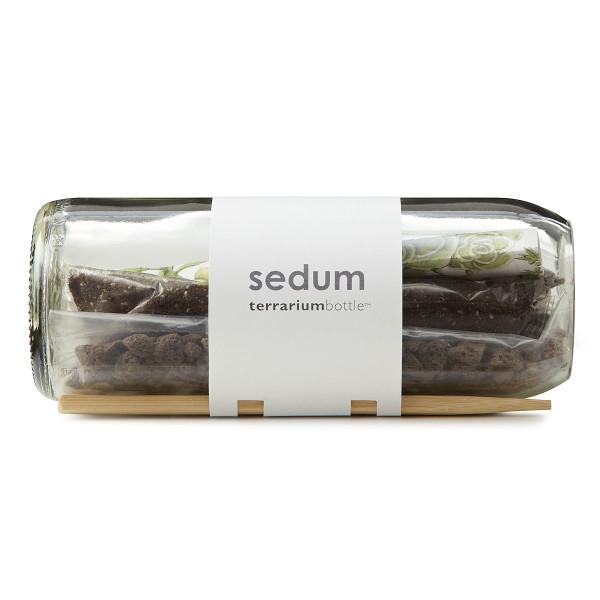 Bambeco Sedum Terrarium Bottle