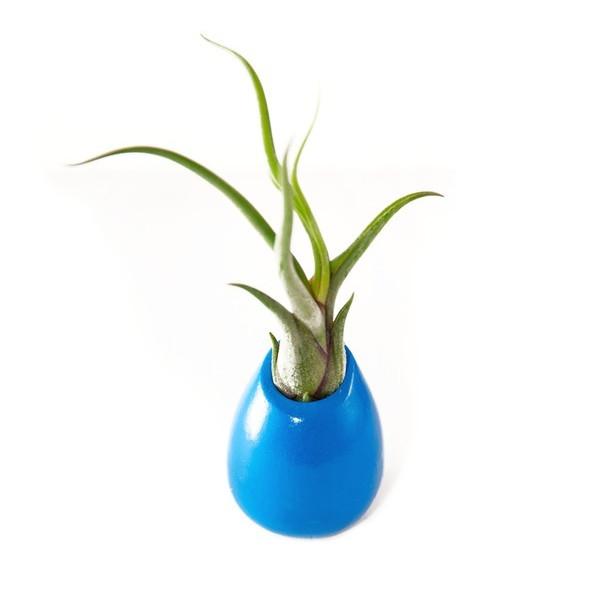 Hinterland Trading Medusa Air Plant in Ceramic Vase