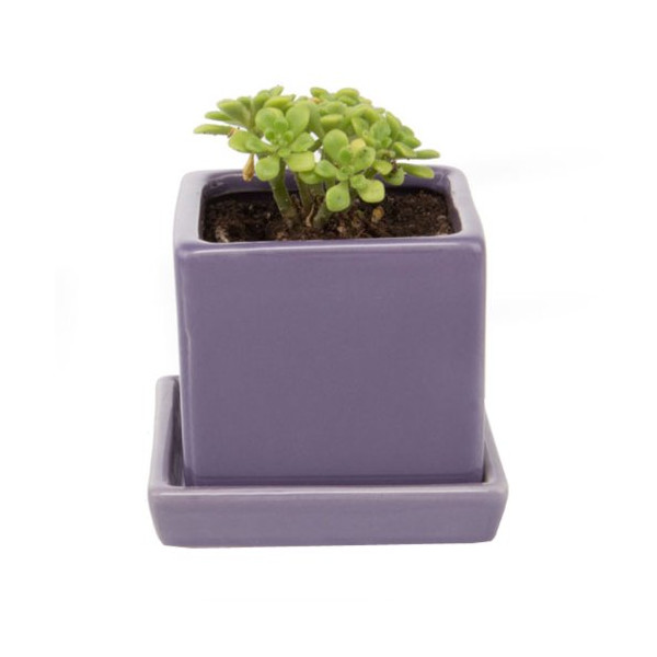 Chive - Cube & Saucer, Ceramic Planter, in Purple