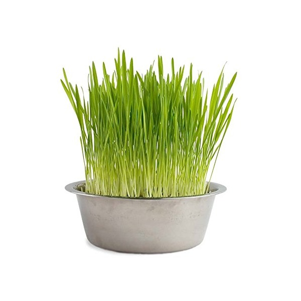 Potting Shed Creations Pet Bowl Cat Grass