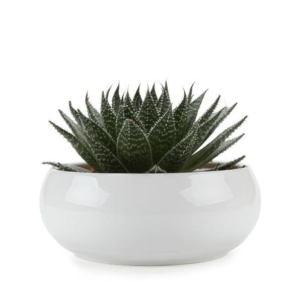 T4U 6.5 Inch Round Ceramic Planter, White