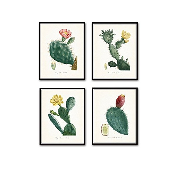 French Cactus Botanical Print Set No. 1 - Giclee Canvas Art Prints