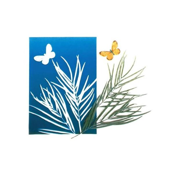 Nature Print Paper - 5 x 7 inch - Pack of 30