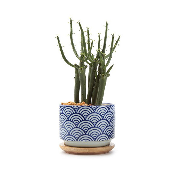T4U 3 Inch Ceramic japanese Style Serial No.3 Sucuulent Plant Pot/Cactus Plant Pot Flower Pot/Container/Planter White