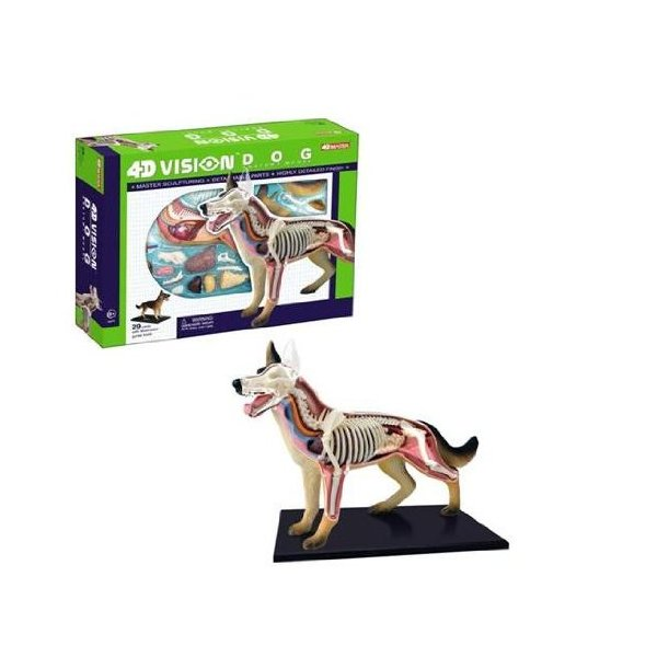 Tedco 4D Vision Dog Anatomy Model
