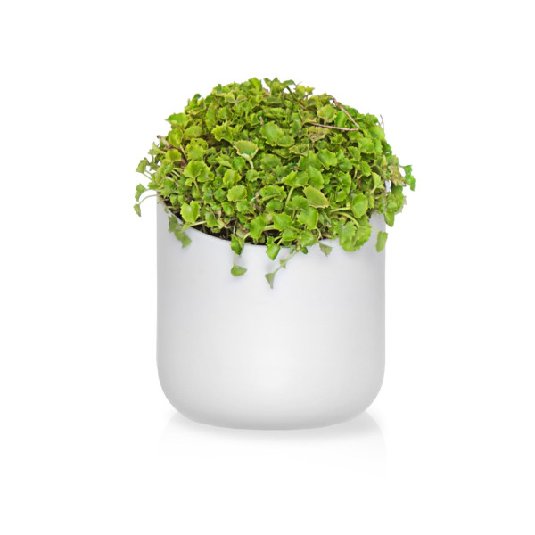 Urbio Shorty Wall Planters