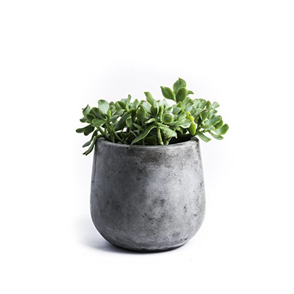 Repose Samai Succulent Planter, Medium