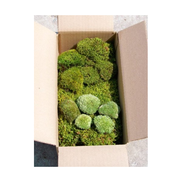 Terrarium Moss Kit