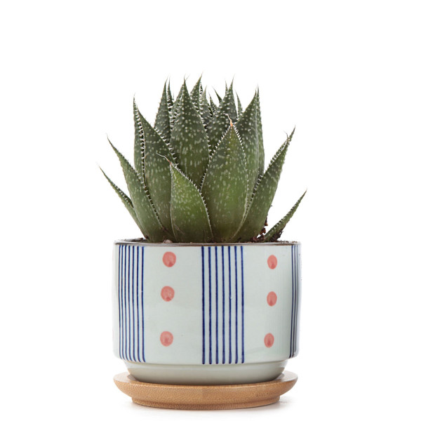 T4U Ceramic Japanese Style Serial No.5 Sucuulent Plant Pot, 3-Inch