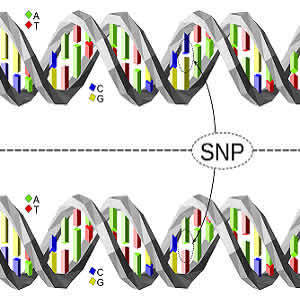 New Genetic Tool Identifies Risk of Coronary Heart Disease
