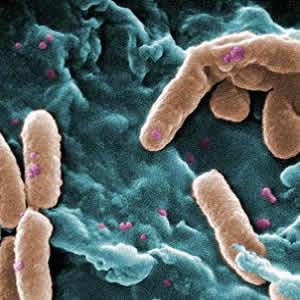New Treatment for Antibiotic Resistant Bacteria