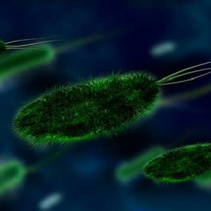 Managing bacterial infections in the ICU