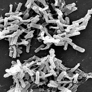 Sleeping with the enemy: C.difficile infection in ICU