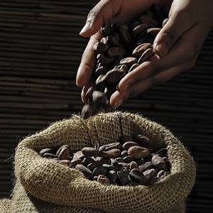 How bioactive compounds in cocoa help keep the heart healthy