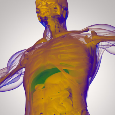 MRI effectively monitors liver fat in obese patients