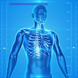 How the Human Body Can Make Data Networks Safer