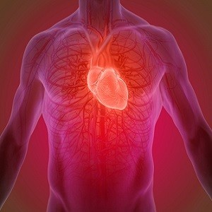 Heart-on-a-Chip Technology Directly Measures In-Vivo Cardiac Performance
