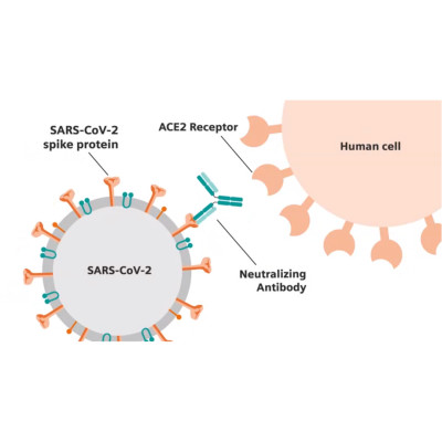 Siemens Healthineers Collaboration With CDC To Standardize SARS-CoV-2 Assays