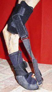 Leg veterinary splint / for canines Hindlimb Dorsi-Flex Assist Thera-Paw