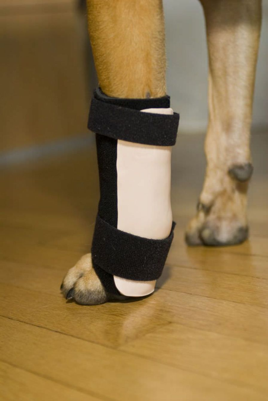 Carpal tunnel veterinary splint / for canines Thera-Paw