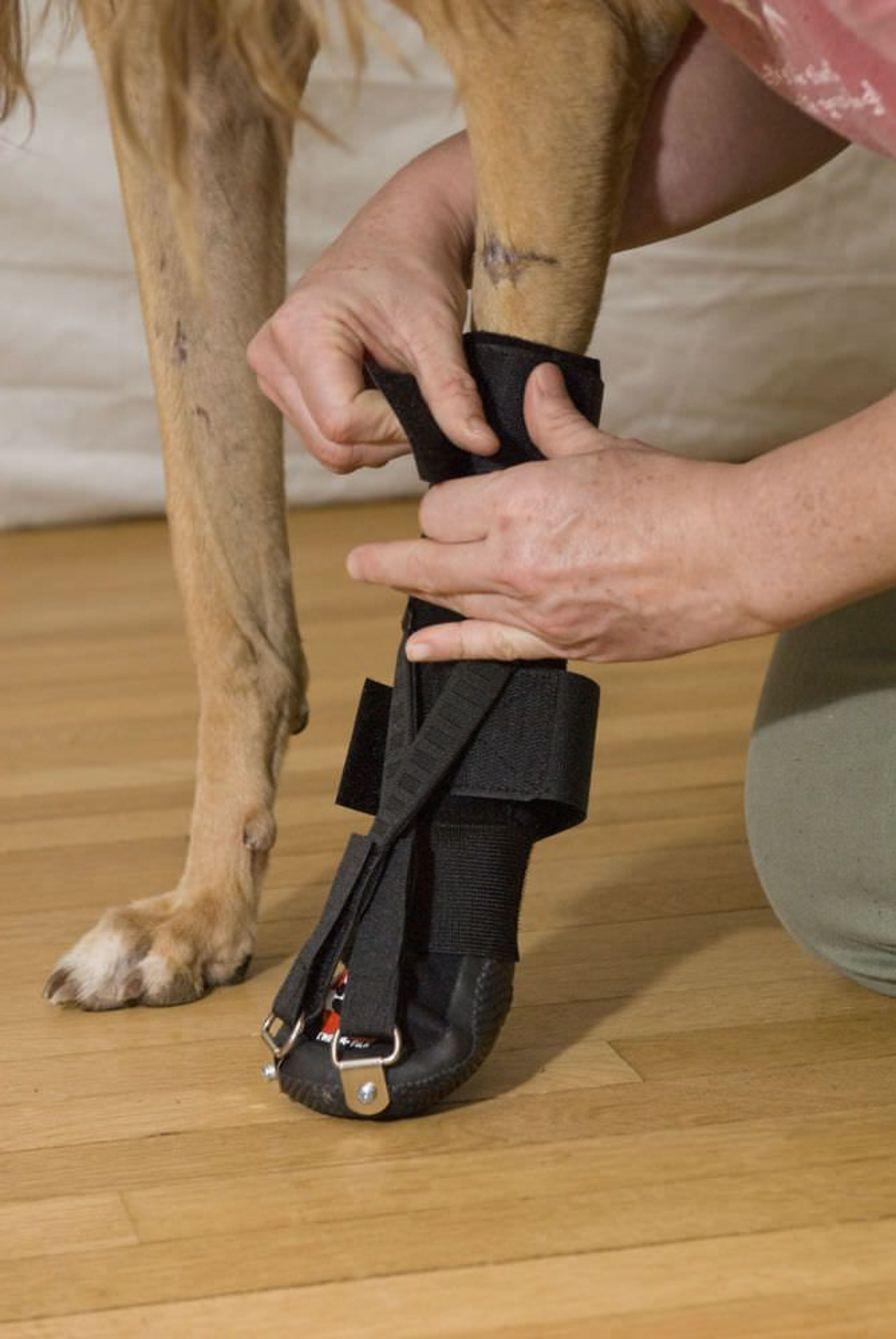 Leg veterinary splint / for canines Forelimb Dorsi-Flex Assist Thera-Paw