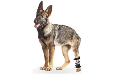 Hock protection reeducation Hock Splint Walkin' Wheels