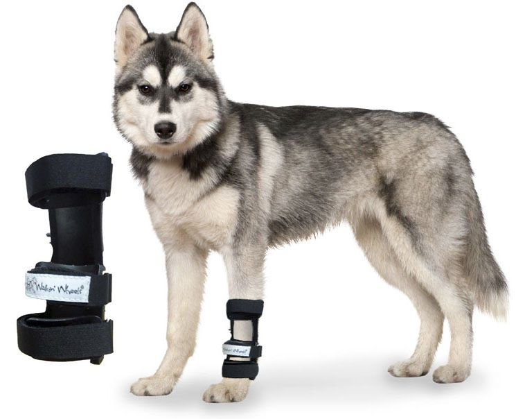 Carpal tunnel veterinary splint / for canines Carpal Splint Walkin' Wheels