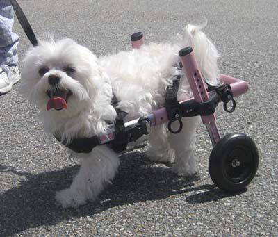 Passive wheelchair / veterinary Mini Walkin Wheels Walkin' Wheels