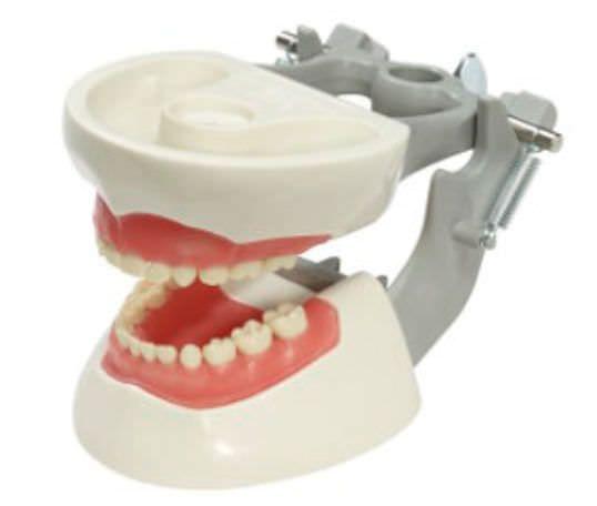 Denture anatomical model / child M-PVNR-760 Columbia Dentoform®