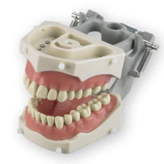 Denture anatomical model SM-PVR-860 Columbia Dentoform®