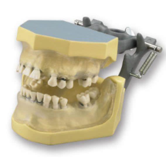 Denture anatomical model KM-C-110 (C) Columbia Dentoform®