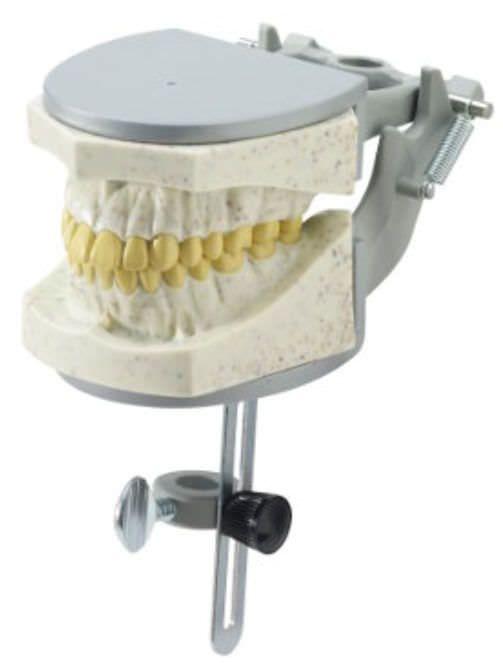 Denture anatomical model 1974 RAD Columbia Dentoform®