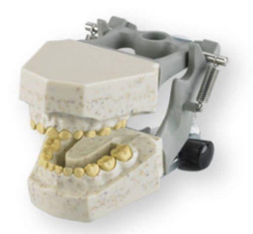 Denture anatomical model / child 765 RAD Columbia Dentoform®
