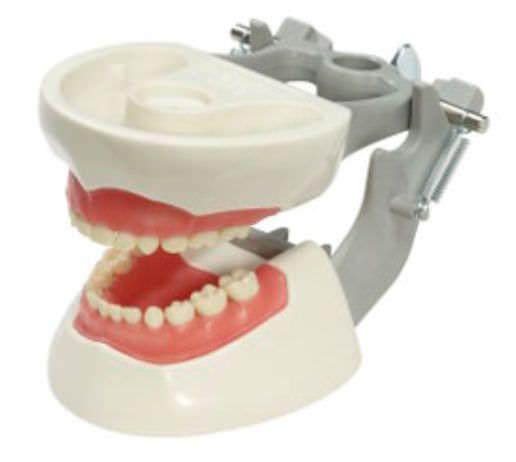 Denture anatomical model / articulated M-PVNR-760 Columbia Dentoform®