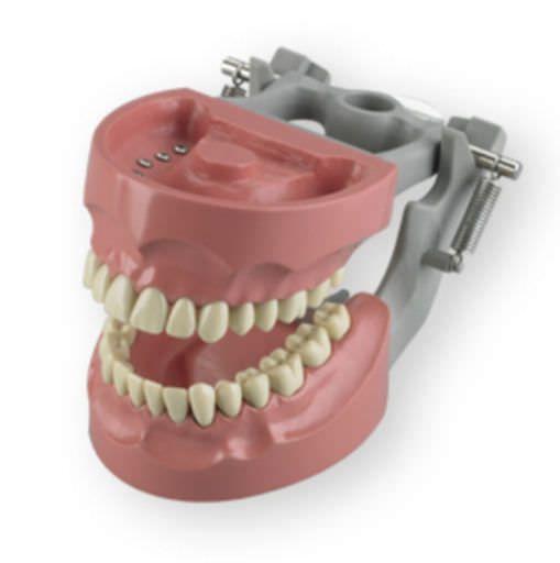 Denture anatomical model M-1560 Columbia Dentoform®