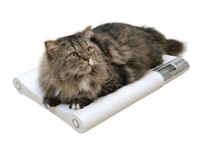 Veterinary balance / electronic 20 kg   MS2410 Charder Electronic