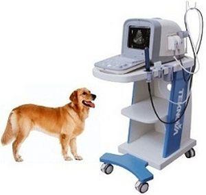 Portable veterinary ultrasound system TH-100VET Teknova Medical Systems