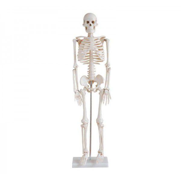 Skeleton anatomical model / miniature YA/L012 YUAN TECHNOLOGY LIMITED