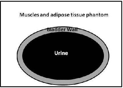 Ultrasound imaging test phantom / bladder Yezitronix