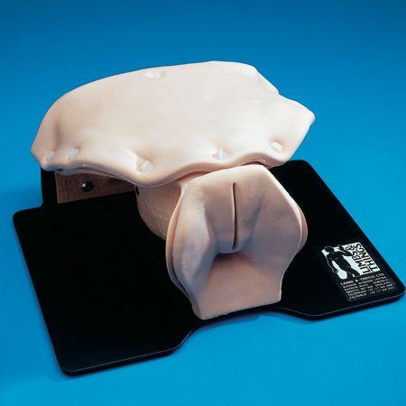 Peritoneal lavage training simulator 60290 Limbs & Things