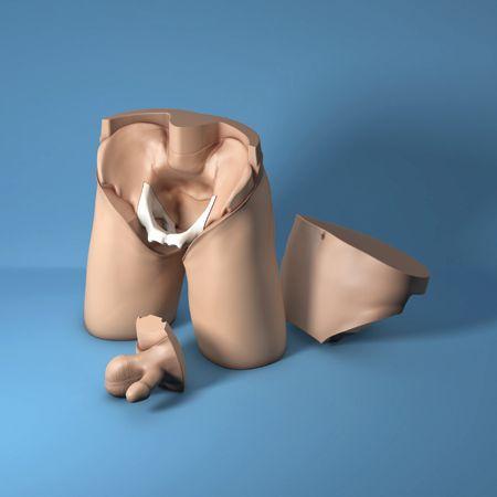 Pelvic examination simulator / male 60950 Limbs & Things