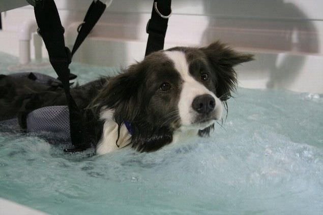 Canine grooming bathtub K9 Surf