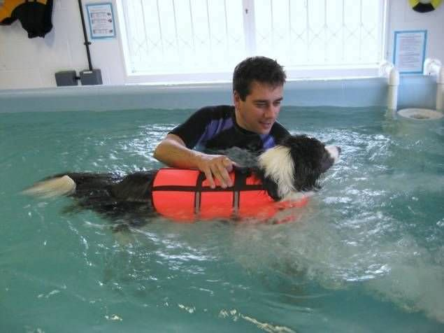 Veterinary rehabilitation swimming pool Hydro-Flex K9 Surf