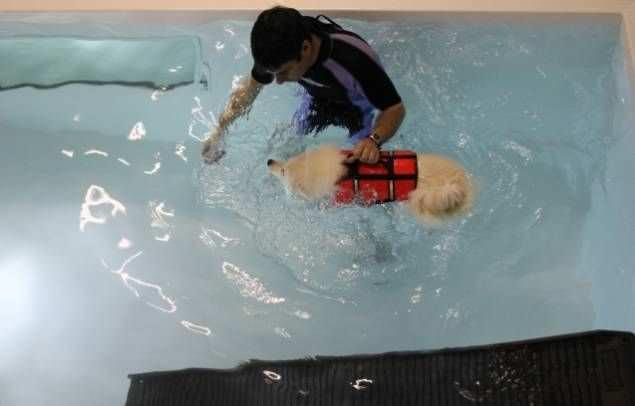 Veterinary rehabilitation swimming pool Hydro-Pro K9 Surf