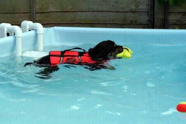 Veterinary rehabilitation swimming pool Hydro-At-Home K9 Surf
