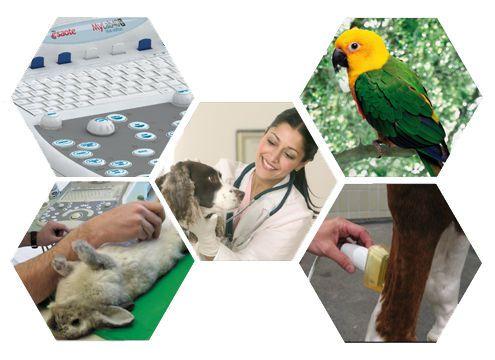 Veterinary ultrasound system / on platform MyLab™40 VET ESAOTE