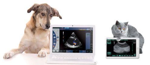 Veterinary ultrasound system / on platform MyLab™ClassC VET ESAOTE