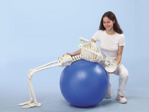Skeleton anatomical model / articulated / with flexible spine 3014 Hugo Erler-Zimmer Anatomiemodelle